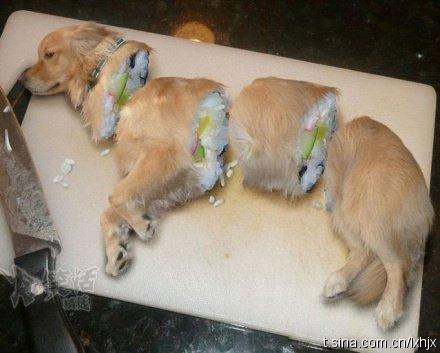 Chinesisches Hundesushi